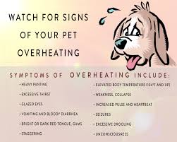 Make sure that your pets have plenty of water and shade