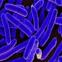 Listeria hysteria- Listeriosis 3